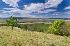 Sunny Blue Sky, prado e uma árvore Foto de Stock Royalty Free