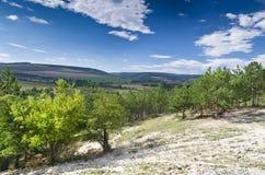 Sunny Blue Sky, prado e uma árvore Fotografia de Stock