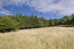 Sunny Blue Sky, prado y colinas Imagenes de archivo