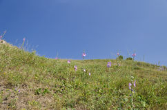 Sunny Blue Sky, prado y colinas Fotografía de archivo libre de regalías