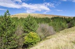 Sunny Blue Sky, prato e colline fotografie stock