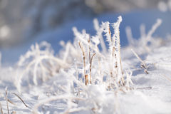 Free Sunny Blurred Frosty Grass Covered With Frost Royalty Free Stock Photos - 63812818
