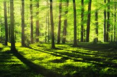Sunny and bright forest. At spring royalty free stock images