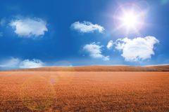 Sunny brown landscape Royalty Free Stock Photos