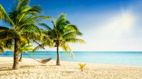 Sunny carribean beach with palmtrees and traditional braided hammock. Sunny beach with clear blue water, palm trees and traditional hand braided hammock Royalty Free Stock Photography