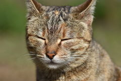 Sunny Cat ! Photographie stock libre de droits
