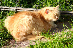 Sunny cat Royalty Free Stock Images