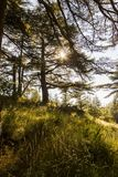 Sunny Cedar forest - Lebanon. The Bcharreh forest in Lebanon stock photography