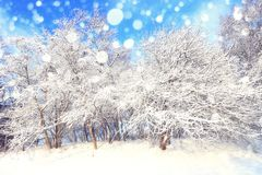 Sunny christmas day. In central park. White fluffy snow on trees in park. Snowy xmas theme royalty free stock photography