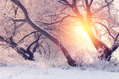 Sunny Christmas morning Royalty Free Stock Images
