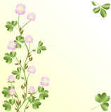Sunny clover Royalty Free Stock Photos
