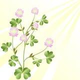 Sunny clover Stock Photo