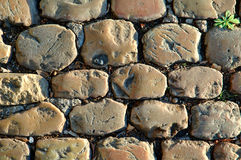 Sunny Cobbled Road Close Up. Detail of a sunny cobbled road in automn, with grass Royalty Free Stock Photos