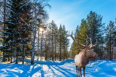 Sunny cold winter day in the Arctic Royalty Free Stock Images