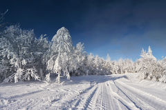Sunny cold winter day Royalty Free Stock Image
