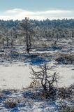 Sunny winter day in the bog. Sunny and cold winter day in the bog with snow and ice stock photography