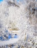 Sunny, cold winter day in the garden. Covered with snow; narrow path between ornamental plants; a large willow is distinguished by darker, thick branches stock image