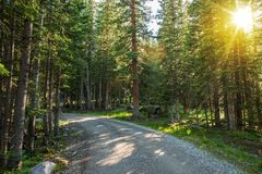 Sunny Colorado Forest Road Photos libres de droits