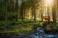 Sunny coniferous forest in autumn evening. Small brook in foreground and wooden shed in the distance stock photo