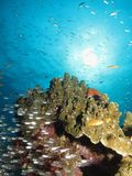 Sunny coral reef Stock Images