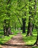 Sunny corridor. Corridor of light guarded by leafy trees Royalty Free Stock Photos