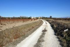 Sunny country road in the middle of the fields and vineyards. Sunny country road in the middle of the fields. The path is covered with clear gravel and the sky Stock Photo