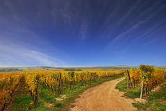 Sunny Country Road in a Vineyard Royalty Free Stock Photos
