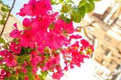 Sunny Creete Stock Image