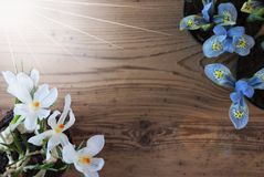 Sunny Crocus And Hyacinth, Exemplaarruimte voor Reclame Royalty-vrije Stock Afbeelding