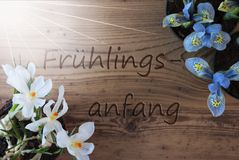 Sunny Crocus And Hyacinth, Fruehlingsanfang Means Beginning Of Spring Royalty Free Stock Image