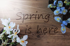 Sunny Crocus And Hyacinth, Text Spring Is Here Royalty Free Stock Image
