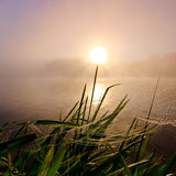 Sunny dandelion Royalty Free Stock Photography