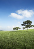Sunny day. Trees in an empty field on a sunny day Stock Photo