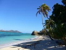Sunny day. Coconut tree,Melbravo resort, Fiji royalty free stock image