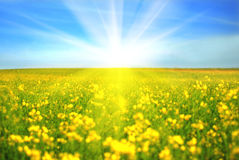 Sunny day Royalty Free Stock Photography