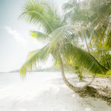 Sunny day at amazing tropical beach with palm tree. White sand and turquoise ocean waves. Myanmar (Burma) travel landscapes and destinations Stock Photos
