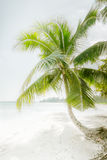 Sunny day at amazing tropical beach with palm tree Royalty Free Stock Photography