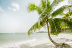 Sunny day at amazing tropical beach with palm tree, white sand and turquoise ocean waves. Myanmar Royalty Free Stock Photos