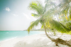 Sunny day at amazing tropical beach with palm tree. White sand and turquoise ocean waves. Myanmar (Burma) travel landscapes and destinations Stock Image
