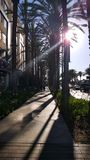 A sunny day in Anaheim, California, United States. Walking a street in Anaheim, California, United States with sunlight through the long palms royalty free stock photography