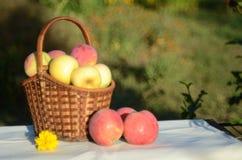 Sunny apples stock photos