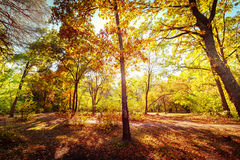 Sunny day in autumn park with colorful trees Stock Photo