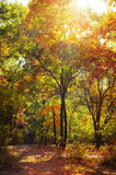 Sunny day in autumn park with colorful trees Stock Photos