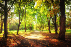 Sunny day at autumn park with colorful trees and pathway stock photos