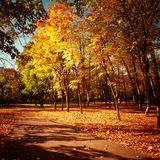 Sunny day at autumn park with colorful trees and pathway Royalty Free Stock Photo