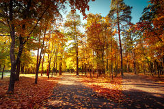 Sunny day at autumn park with colorful trees and pathway. Sunny day in outdoor park with colorful autumn trees and pathway. Amazing bright colors of autumn Stock Image