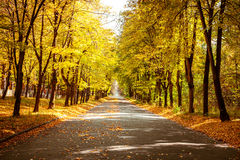 Sunny day at autumn park with colorful trees and pathway. Sunny day in outdoor park with colorful autumn trees and pathway. Amazing bright colors of autumn Royalty Free Stock Photos