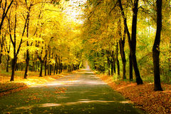 Sunny day at autumn park with colorful trees and pathway Royalty Free Stock Image