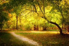 Sunny day at autumn park with colorful trees and pathway Royalty Free Stock Photography