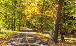Sunny day in autumn park. Stock Images